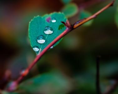 2015-10-01_Water_Drops_11