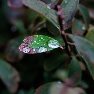 2015-10-01_Water_Drops_02