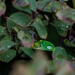 2015-10-01_Water_Drops_08
