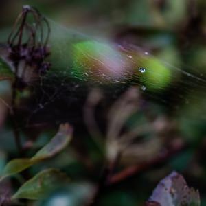 2015-10-01_Water_Drops_09