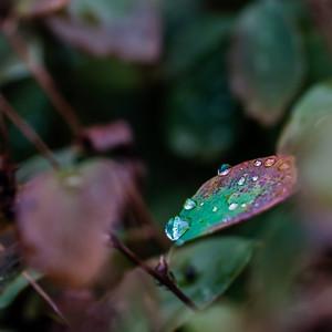 2015-10-01_Water_Drops_04