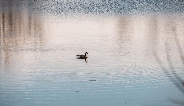 2015-04-14_Sagecrest_Pond_23
