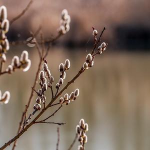 2015-04-14_Sagecrest_Pond_02