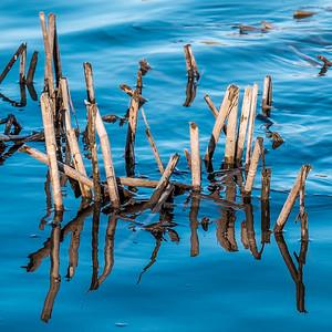2015-04-14_Sagecrest_Pond_08