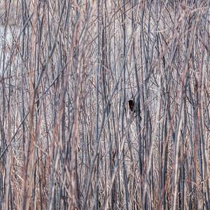 2015-04-14_Sagecrest_Pond_07