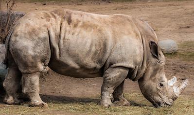 2015-04-16_Toronto_Zoo_20