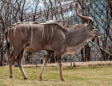 2015-04-16_Toronto_Zoo_18