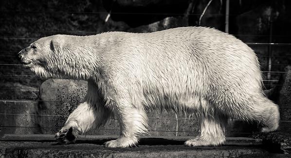 2015-04-16_Toronto_Zoo_10