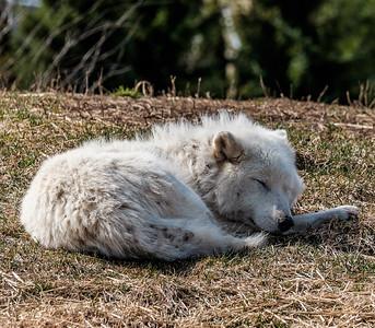 2015-04-16_Toronto_Zoo_11