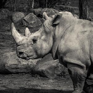 2015-04-16_Toronto_Zoo_19