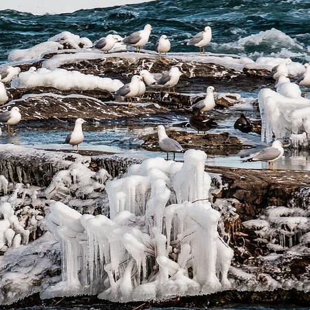 2016-03-13_Niagara_Ice_Birds
