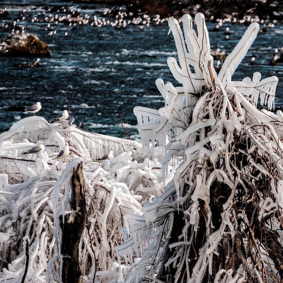 2016-03-13_Niagara_Ice_Birds_01