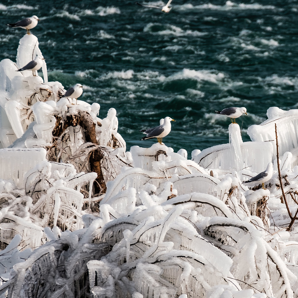 2016-03-13_Niagara_Ice_Birds_13