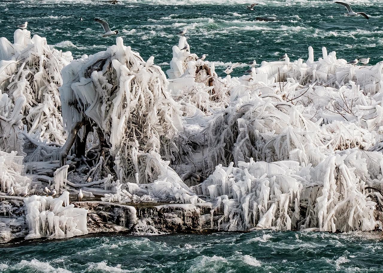 2016-03-13_Niagara_Ice_Birds_14