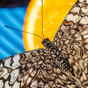 2016-03-16_Niagara_Butterflies_02