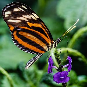 2016-03-16_Niagara_Butterflies_21