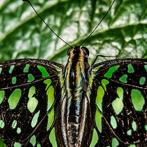 2016-03-16_Niagara_Butterflies_05