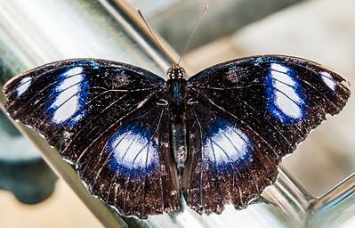2016-03-16_Niagara_Butterflies_13