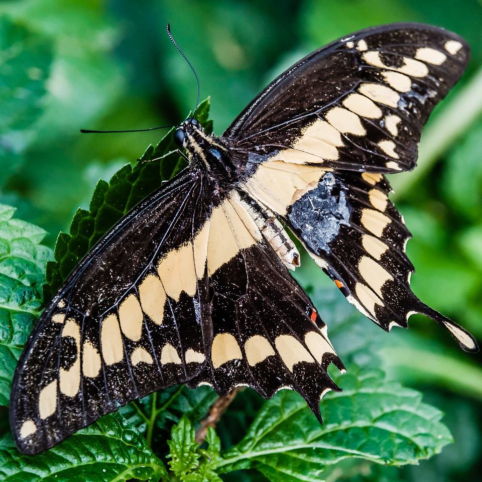 2016-03-16_Niagara_Butterflies_15