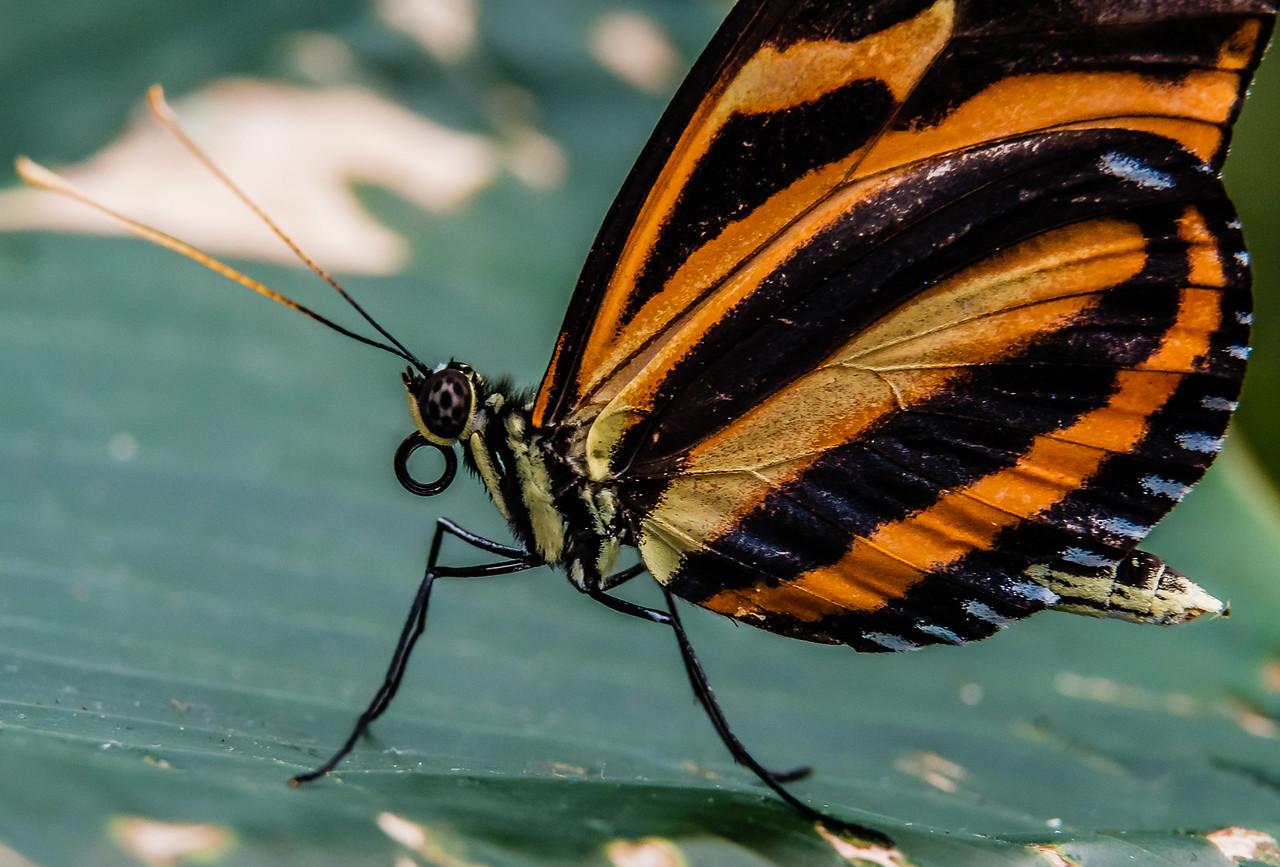 2016-03-16_Niagara_Butterflies_04