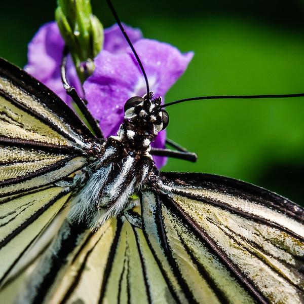 2016-03-16_Niagara_Butterflies_07