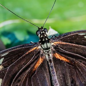 2016-03-16_Niagara_Butterflies_03