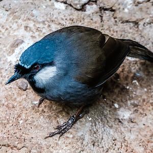 2016-03-17_Niagara_Birds_08