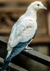 2016-03-17_Niagara_Birds_09