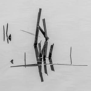 2016-05-03_Sagecrest_Pond_2