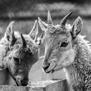 2016-05-28_Toronto_Zoo_18
