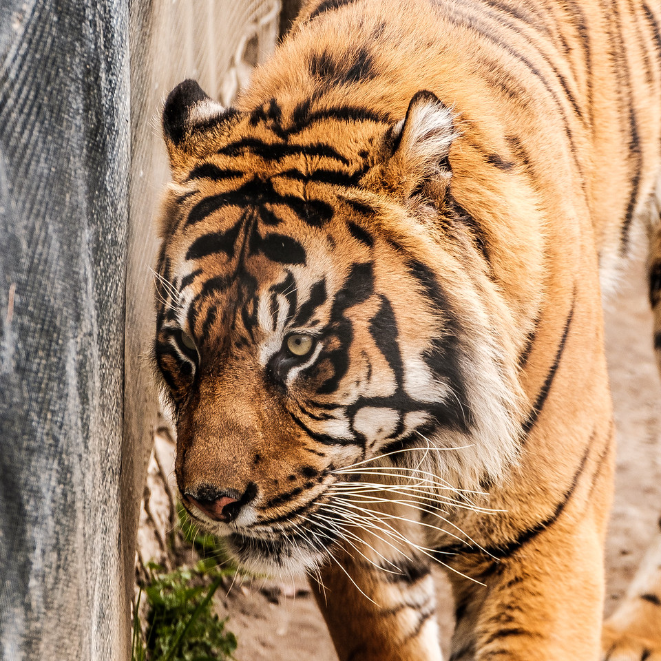 2016-05-28_Toronto_Zoo_64