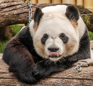 2016-05-28_Toronto_Zoo_02