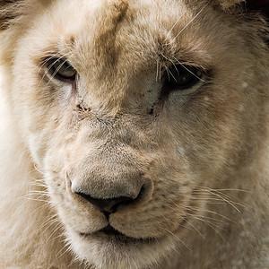 2016-05-28_Toronto_Zoo_41