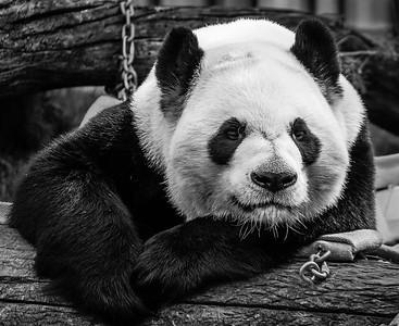 2016-05-28_Toronto_Zoo_03