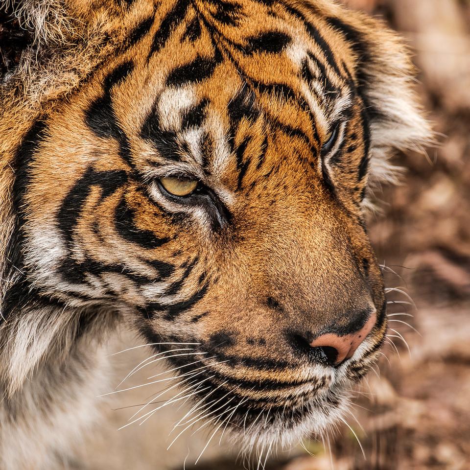 2016-05-28_Toronto_Zoo_65