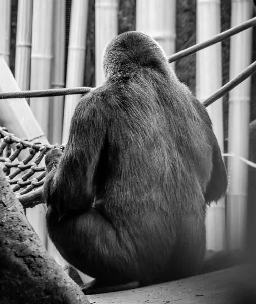 2016-05-28_Toronto_Zoo_61
