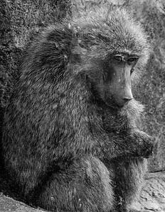 2016-05-28_Toronto_Zoo_42