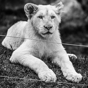 2016-05-28_Toronto_Zoo_34