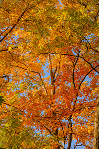 2016-10-07_Thornhill_Woods_Park_16