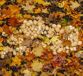 2016-10-17_Mist_and_Mushrooms_22