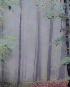 2016-10-17_Mist_and_Mushrooms_10