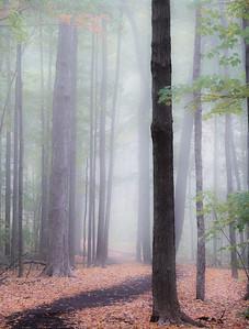 2016-10-17_Mist_and_Mushrooms_01