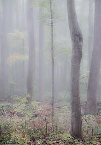 2016-10-17_Mist_and_Mushrooms_18