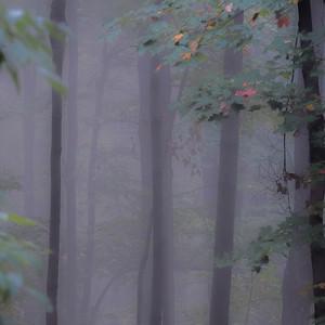 2016-10-17_Mist_and_Mushrooms_11