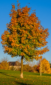 2016-11-04_Tree_and_Leaf_10
