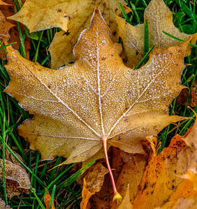 2016-11-04_Tree_and_Leaf_21