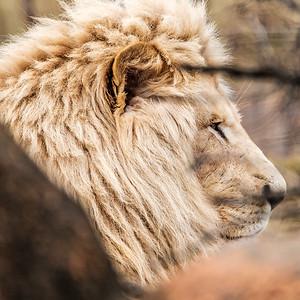2017-03-29_Zoo_43