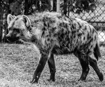 2017-03-29_Zoo_33