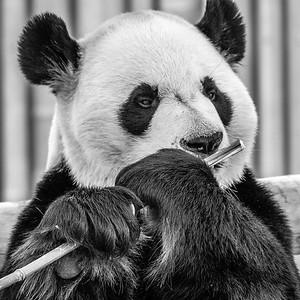 2017-03-29_Zoo_07