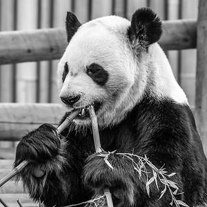 2017-03-29_Zoo_12